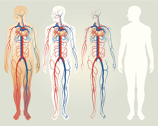Illustration of the human body layers